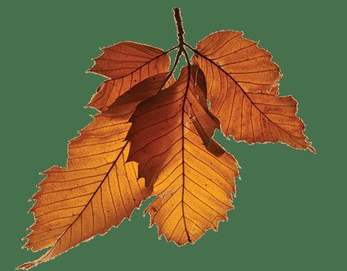 jump_leaf